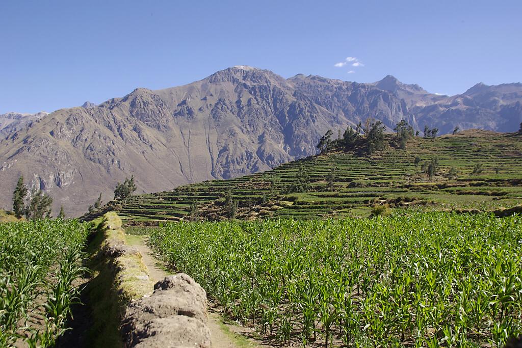 Terrassenfelder bei Cabanaconde im Colca-Tal