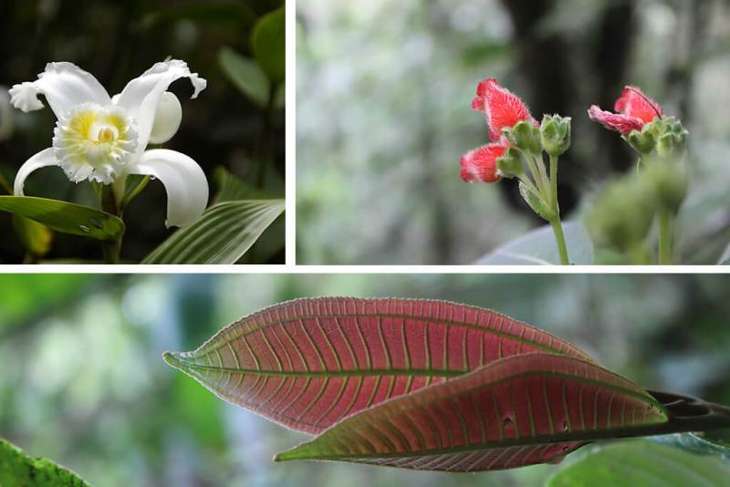 Blumen am Rio Pastaza