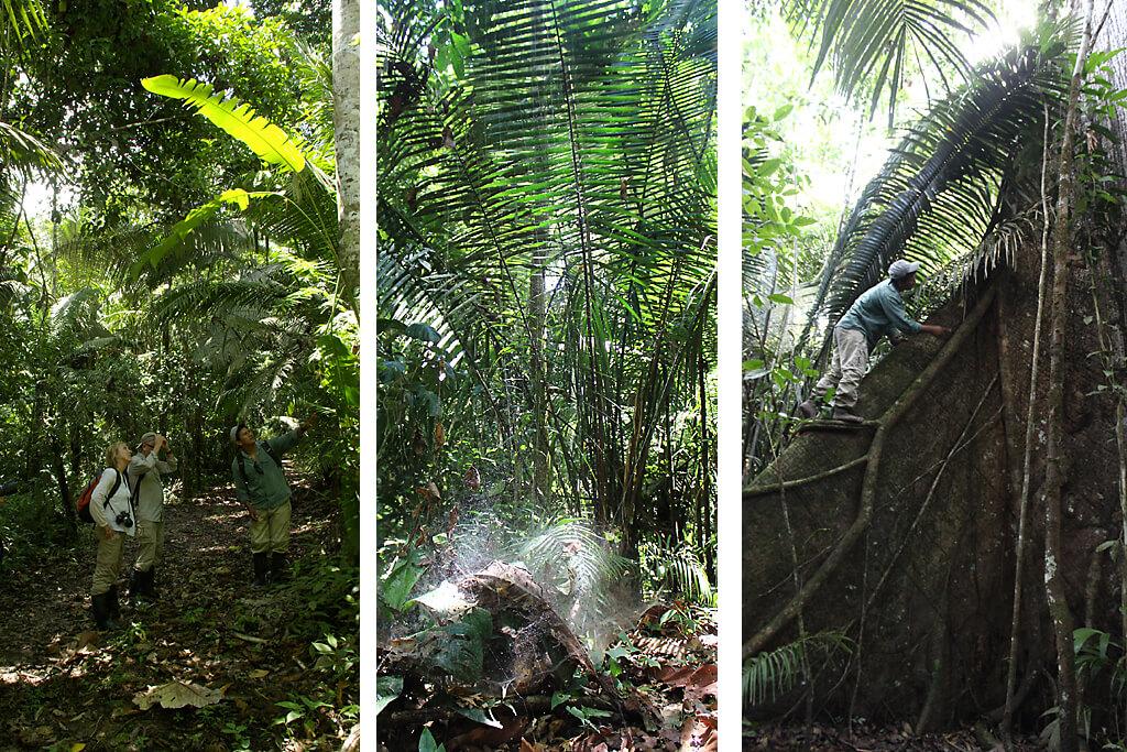 Wanderung durch den Regenwald von Ecuador