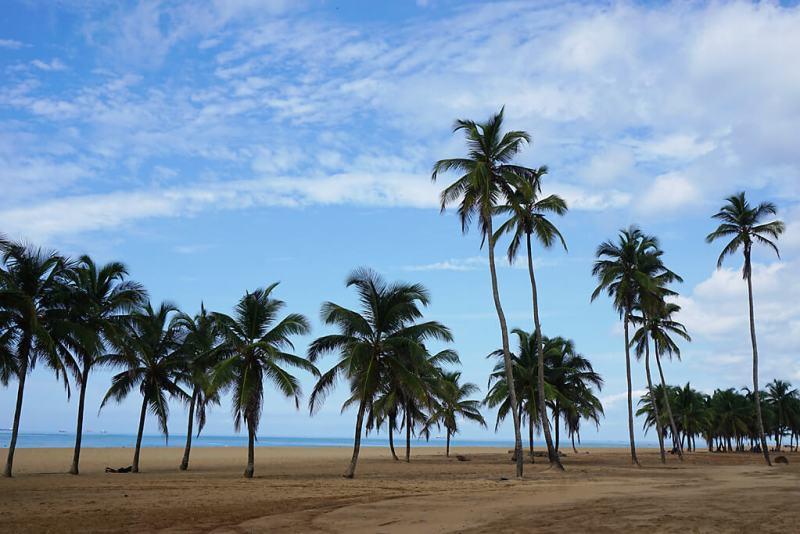 Palmen am Strand von Lomé