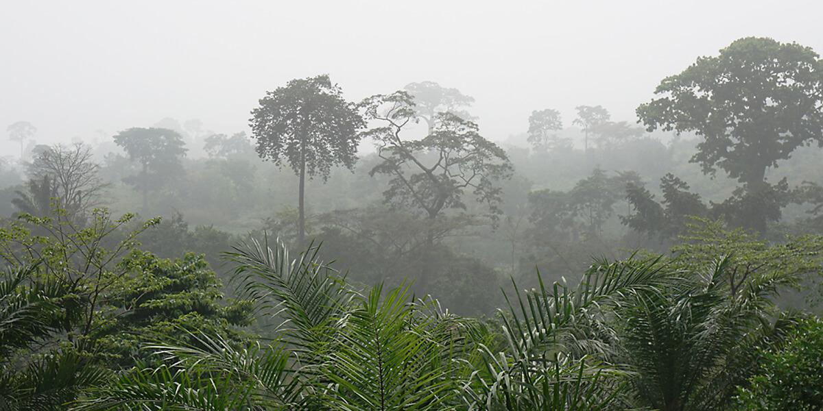 Landschaft beim Harmattan in Westafrika