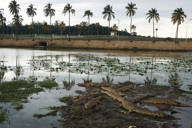 Krokodile vor dem Präsidentenpalast in Yamoussoukro