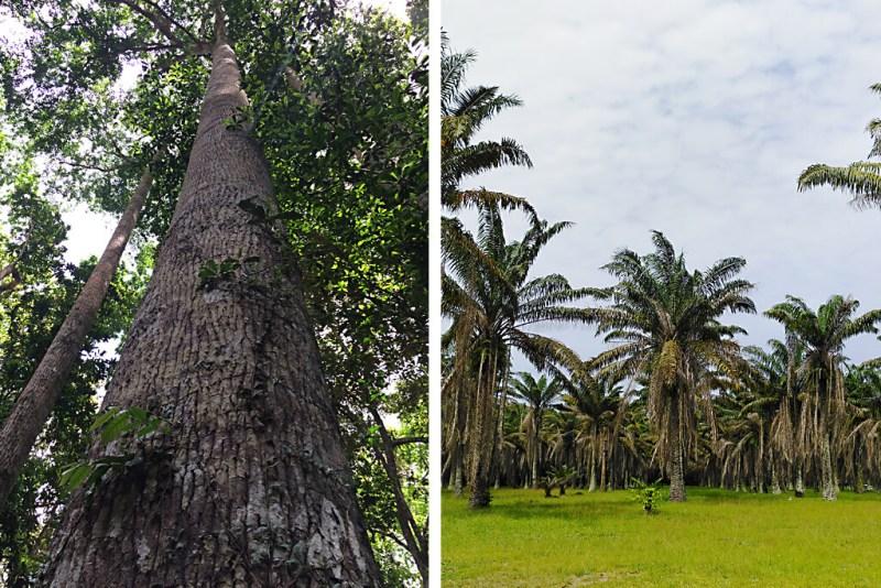 Nationalpark Banco in Abidjan und Botanischer Garten Bingerville