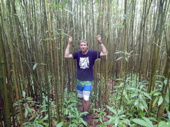 Durch den dichten Bambuswald ...