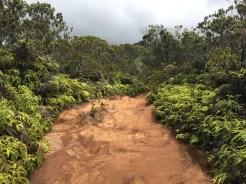 Koke'e State Park trail