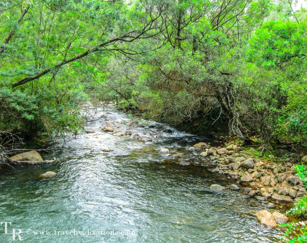 A stream in the Avalanche forest, Encounter with the tiger in Avalanche Forest, India, Travel Realizations