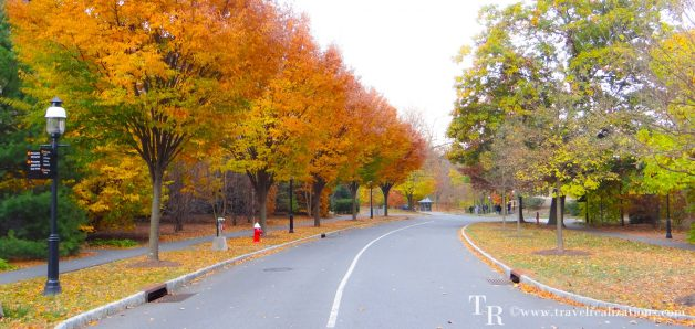 A Fall Foliage in Princeton University Campus