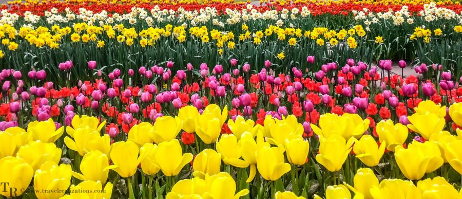Travel Realizations, Keukenhof, spring garden, The Netherlands