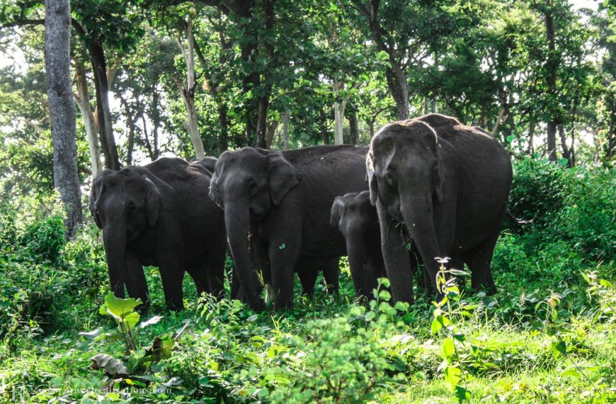 An enchanting forest safari in the Mudumalai Tiger Reserve, India!