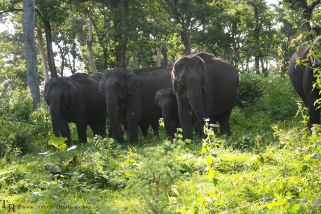 Travel realizations, forest, Mudumalai forest, India, India's top 4 forests to go for a wildlife Safari, Wildlife safari