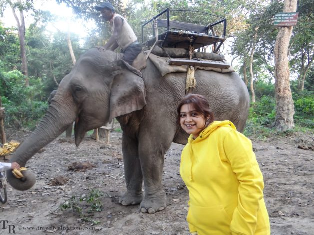 Travel Realizations, Kaziranga, elephant safari, forest safari, Indian forest safaris