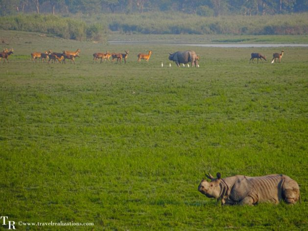 An enchanting forest safari in Kaziranga National Park in India - A world heritage site, Travel Realizations
