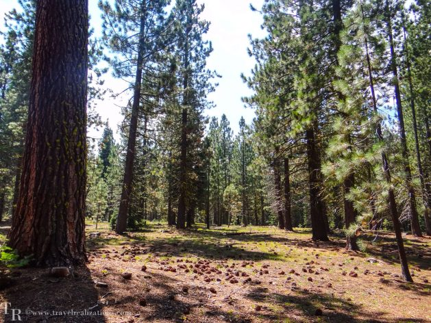 Manzanita Lake in Lassen, California - A photo essay, Travel Realizations, Pine trees