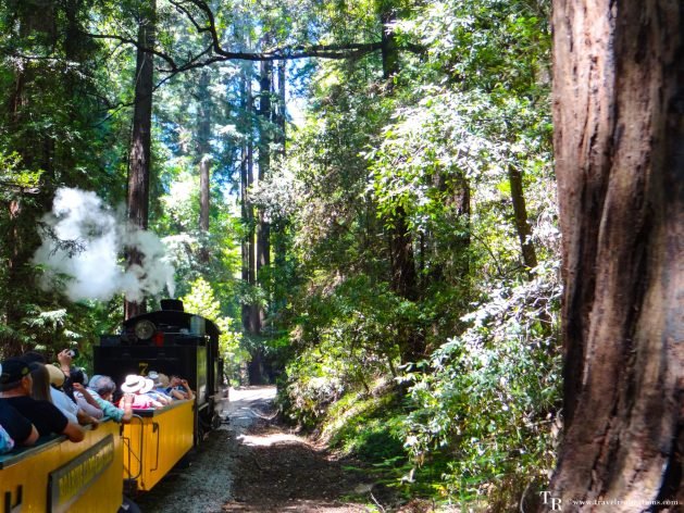 Glimpses of romantic California, Travel Realizations, Henry Cowell Redwoods State Park