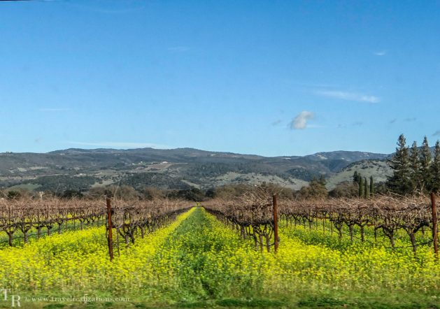 Glimpses of romantic California, Travel Realizations, Napa Valley