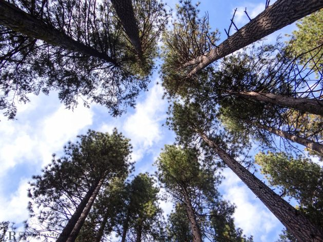 Glimpses of romantic California, Travel Realizations, Stanislaus National Forest