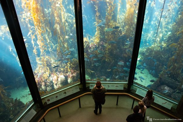 Monterey Bay Aquarium - a window to another world!, Travel Realizations