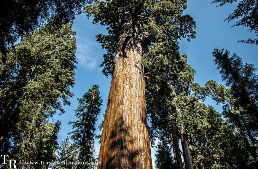 My moments with General Sherman – The largest tree on earth!