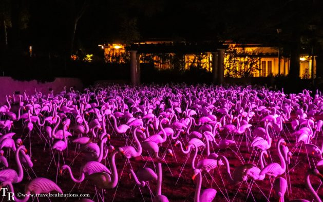 Stories in Light by Bruce Munro - Art that blooms at night, Travel Realizations, Flamingos