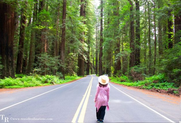 Rendezvous with Redwood trees in the Redwood National Park, California - The tallest trees on earth, Travel Realizations, Avenue of Giants