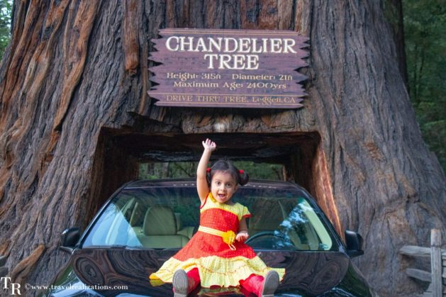 Rendezvous with Redwood trees in the Redwood National Park, California - The tallest trees on earth, Travel Realizations, Chandelier Tree