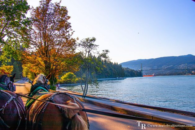 Beautiful Vignettes of  Vancouver, Travel Realizations, Stanley Park, Horse-drawn tour