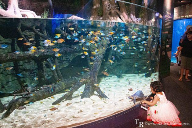 Beautiful Vignettes of  Vancouver, Travel Realizations, Stanley Park, Vancouver Aquarium