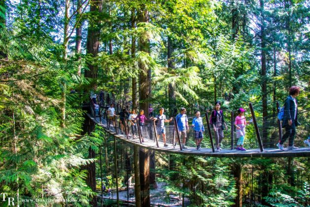 Beautiful Vignettes of  Vancouver, Travel Realizations, Capilano Suspension Bridge Park