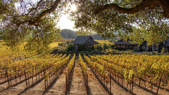 Fall colors in Napa Valley – A Photo Essay