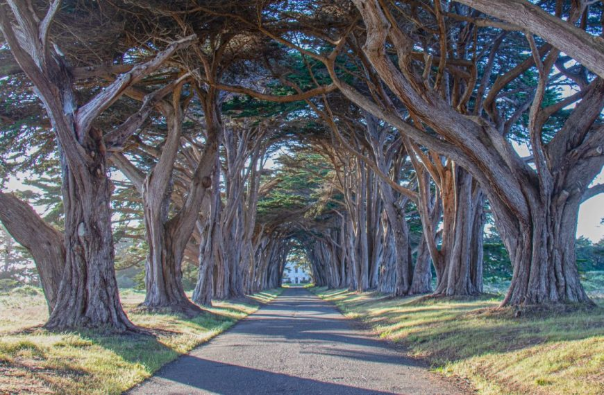 Super scenic Cypress Trees and Tunnels near San Francisco
