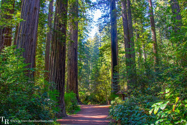 Spring break in California - Best places to visit, Travel Realizations, Redwood National Park