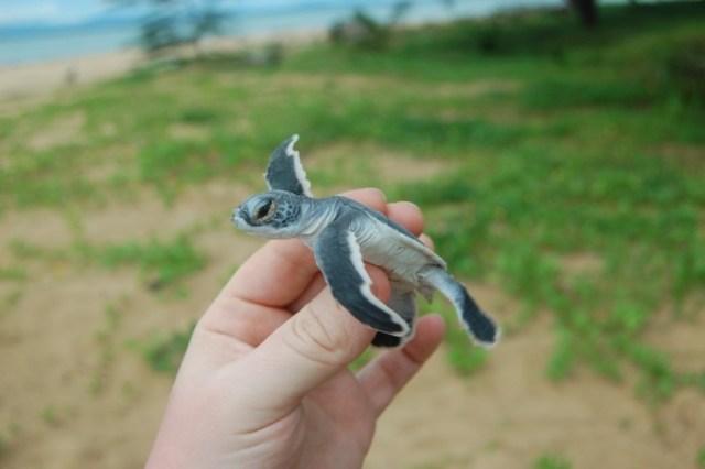 turtle-island-borneo