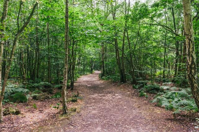 Blean Woods, Canterbury