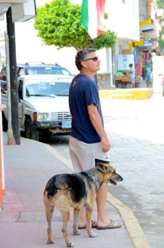 stray dogs mexico
