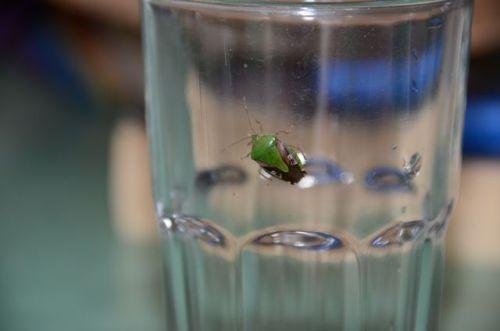 I call this one: Pretty Green Beetle on my Glass -Puesto del Sol Número Ocho