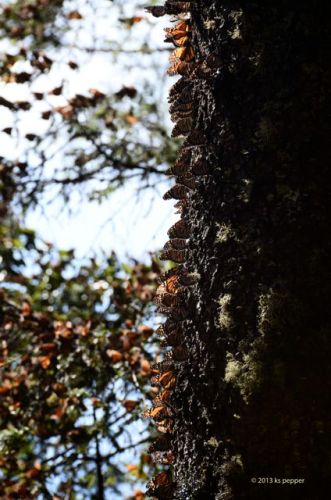 Winged bark