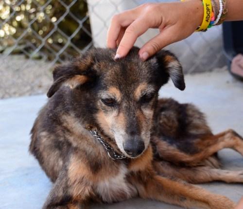 Rescue dog sayulita