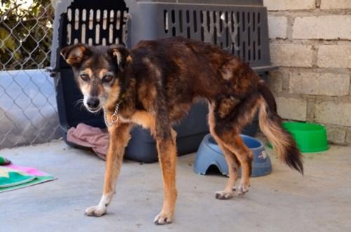 Sayulita Animals rescue dog
