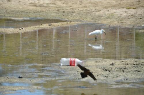 River, litter, basura, Mexico