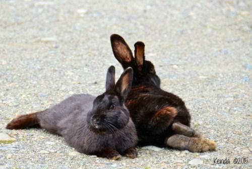 Bunnies of Langley