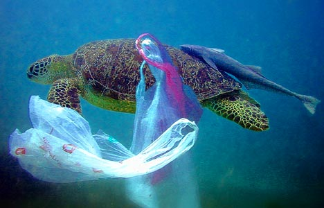 turtle-and-plastic-bags-underwater
