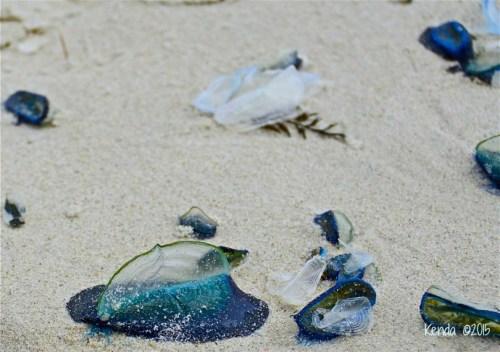 Marine Life_PG Beach
