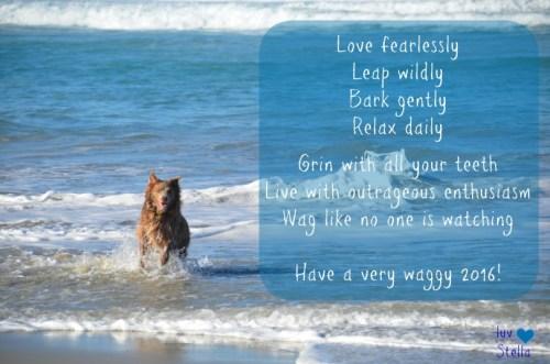Wisdom of Stella_Waggy 2016