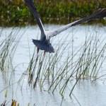 Florida Wetlands