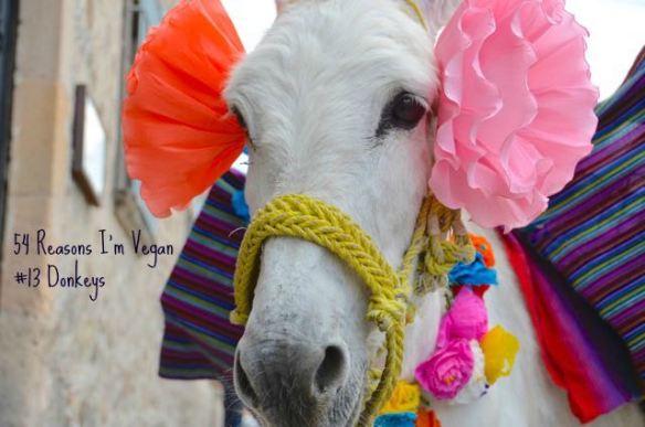 54 Reasons I'm vegan_13 Donkeys