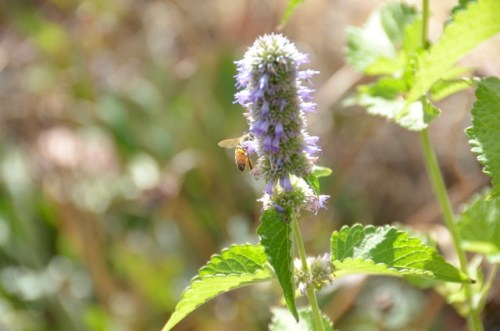 day-12_organic-bee