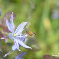 Managing Mosquitoes While Protecting Pollinators Part I
