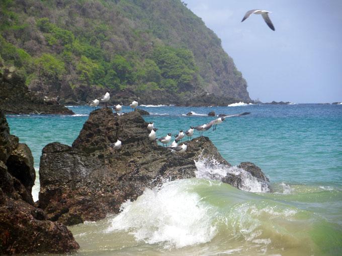 castara beach backpacking in trinidad and tobago