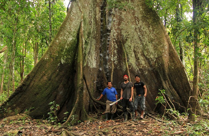 tree iquitos Peruvian Amazon. How to get to Iquitos