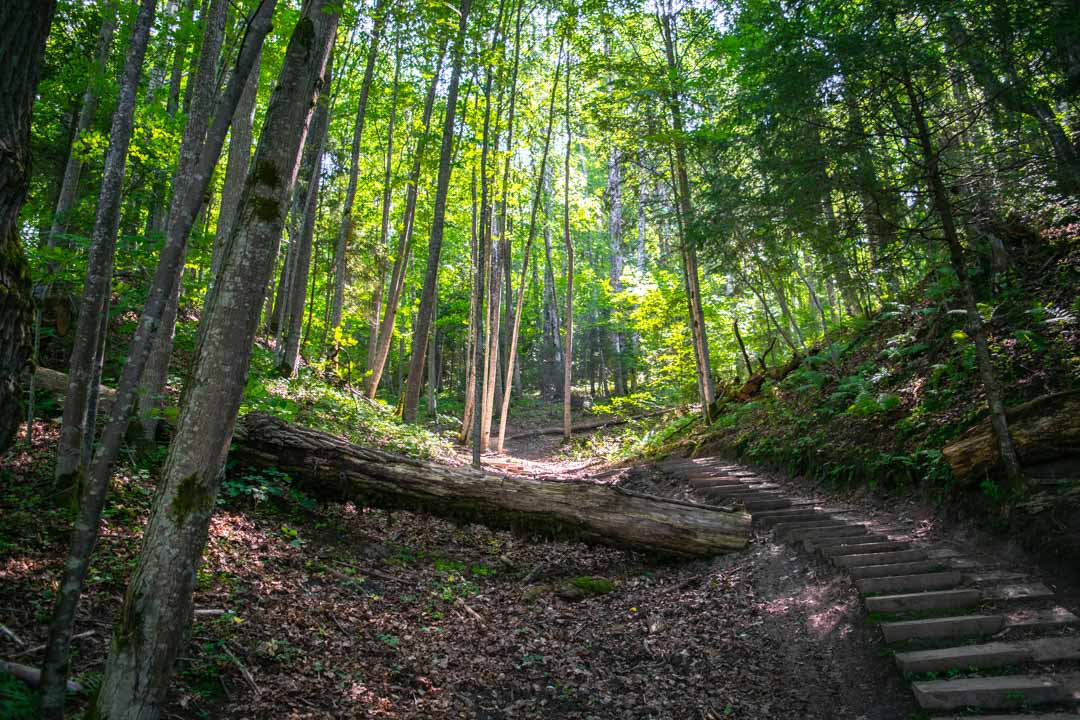 Why I Love Hiking in Gauja National Park, Latvia - Travelsewhere